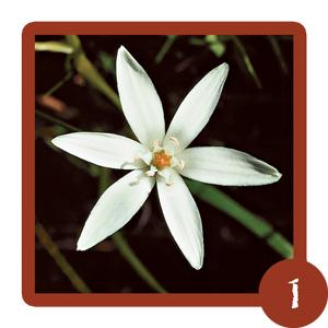 Edelweiss-Module-1-Fleurs-Bach