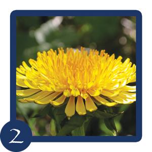 Edelweiss-Module-2-Elixirs-Deva